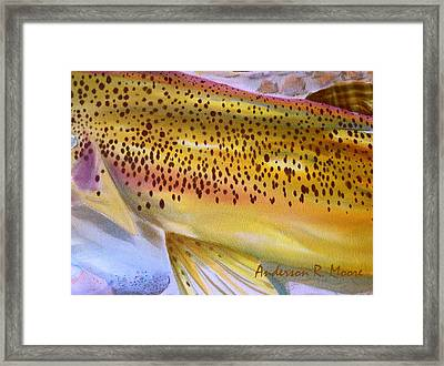 Color Me Trout- Brown Framed Print by Anderson R Moore