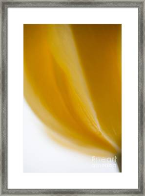 Color Of Sunshine Framed Print by Sue OConnor