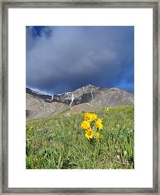 Colorado Beauty Framed Print by Aaron Spong
