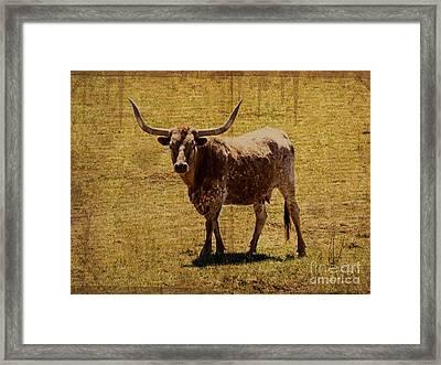 Colorado Longhorn Framed Print by Janice Rae Pariza