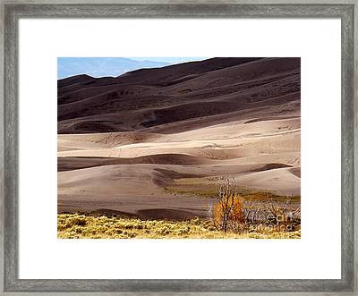 Colorado Sand Dunes Framed Print by Eva Kato