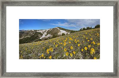 Colorado Wildflower Images - Sunflowers On Top Of Berthoud Pass  Framed Print by Rob Greebon