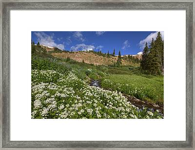 Colorado Wildflowers On Berthoud Pass 1 Framed Print by Rob Greebon