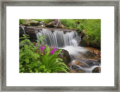 Colorado Wildflowers On Berthoud Pass 2 Framed Print by Rob Greebon