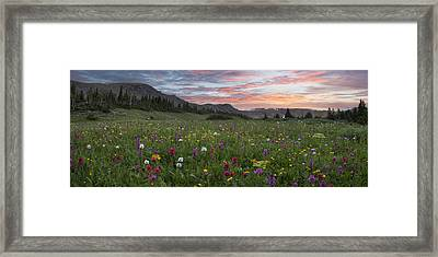 Colorado Wildflowers Panorama - Butler Gulch Colors 1 Framed Print by Rob Greebon