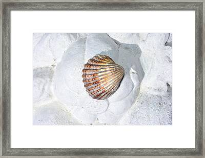 Colored Seashell  Framed Print by Toppart Sweden
