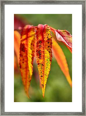 Colorful Autumn Leaves Framed Print by Gynt