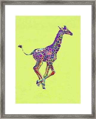 Colorful Baby Giraffe Framed Print by Jane Schnetlage