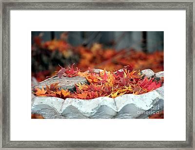 Colorful Bird Bath Framed Print by Yumi Johnson
