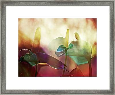Colorful Calla Framed Print by Eiwy Ahlund