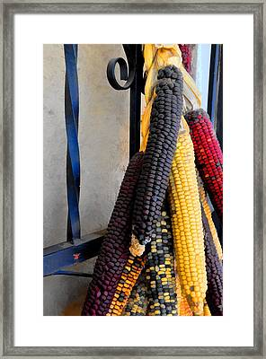 Colorful Corn I Framed Print by Jan Amiss Photography