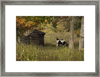 Colorful Display Framed Print by Amber Kresge