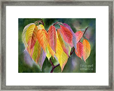 Colorful Fall Leaves With Background Framed Print by Sharon Freeman