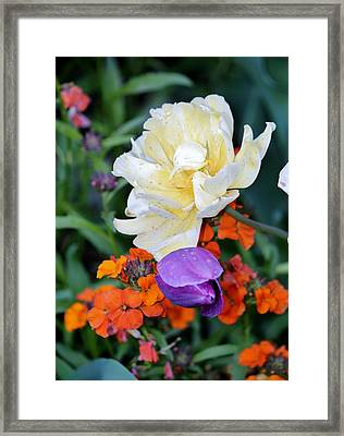 Colorful Flowers Framed Print by Cynthia Guinn
