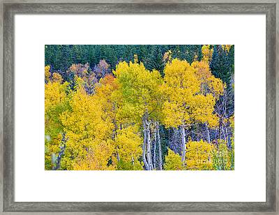 Colorful Forest Framed Print by James BO  Insogna