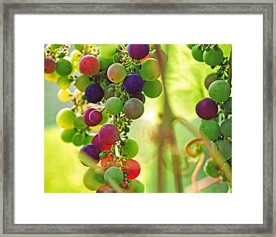 Colorful Grapes Framed Print by Peggy Collins