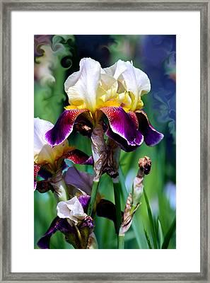 Colorful Iris Grandeur Framed Print by Karon Melillo DeVega
