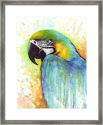 Macaw Painting Framed Print by Olga Shvartsur