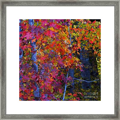Colorful Maple Leaves Framed Print by Scott Cameron