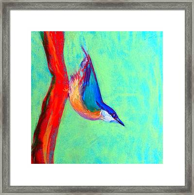 Colorful Nuthatch Bird Framed Print by Sue Jacobi