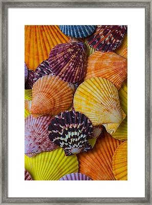 Colorful Shells Framed Print by Garry Gay