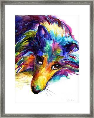 Colorful Sheltie Dog Portrait Framed Print by Svetlana Novikova