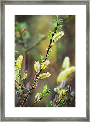 Colorful Spring Pussy Willows Framed Print by Christina Rollo