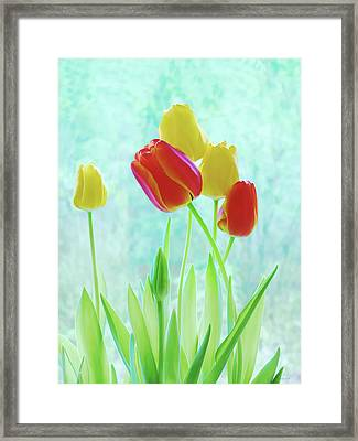Colorful Spring Tulip Flowers Framed Print by Jennie Marie Schell