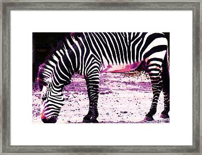 Colorful Zebra 2 - Buy Black And White Stripes Art Framed Print by Sharon Cummings
