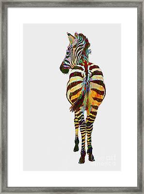 Colorful Zebra Framed Print by Teresa Zieba