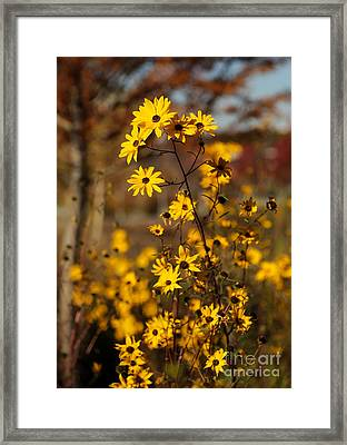 Colors Of Autumn Framed Print by Sabrina L Ryan