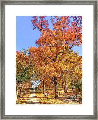 Colors Of Fall Framed Print by Charlie Cliques