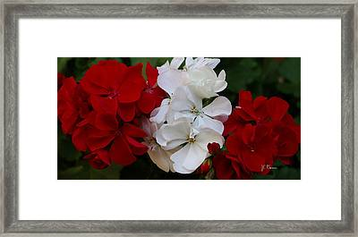 Colors Of Flowers Framed Print by James C Thomas