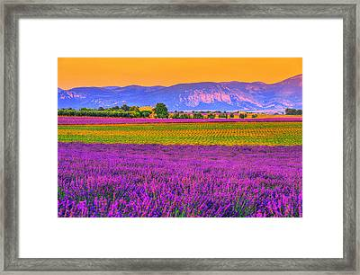 Colors Of Provence Framed Print by Midori Chan