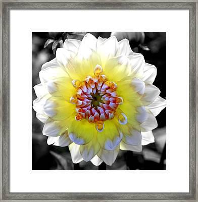 Colorwheel Framed Print by Karen Wiles