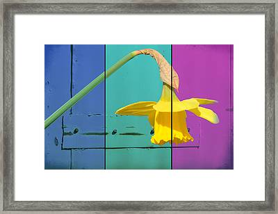 Colour Blocking Spring Framed Print by Lisa Knechtel