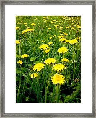 Colours Of Spring Framed Print by Lucy D