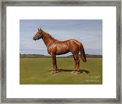 Colt Framed Print by Emma Kennaway