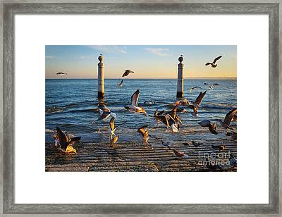 Columns Dock In Lisbon Framed Print by Carlos Caetano