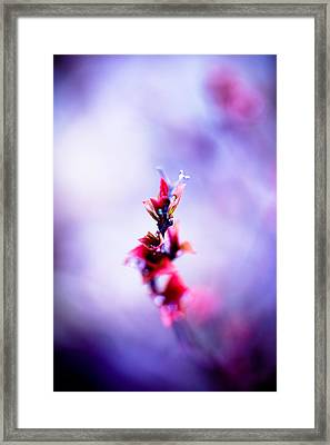 Comatose Framed Print by Shane Holsclaw