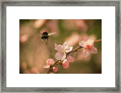 Come To Me Framed Print by Vjekoslav Antic