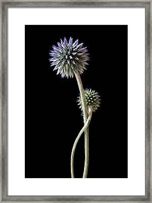 Comfort Framed Print by Maggie Terlecki