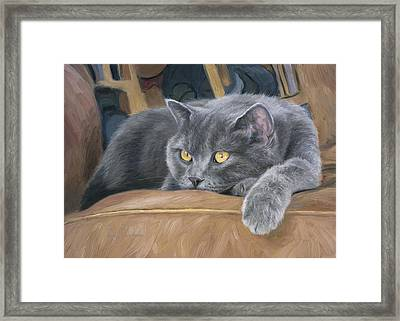 Comfortable Framed Print by Lucie Bilodeau