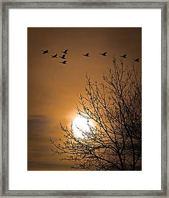 Coming Home In The Spring Framed Print by Bob Orsillo