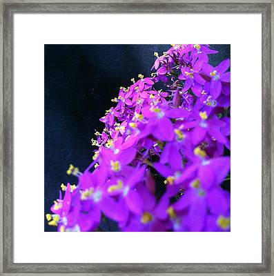Coming In To Land Framed Print by Stephanie Aarons