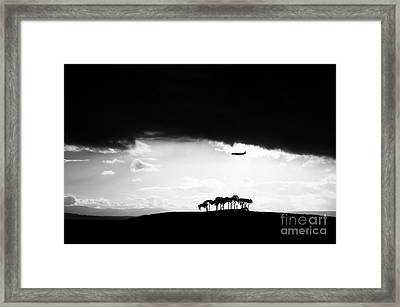 Coming Into Land  Framed Print by Tim Gainey