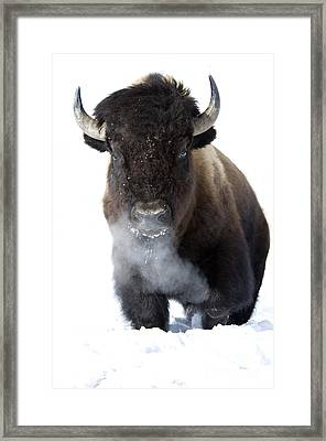 Coming Through Framed Print by Deby Dixon