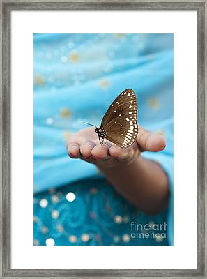 Common Crow Butterfly Framed Print by Tim Gainey