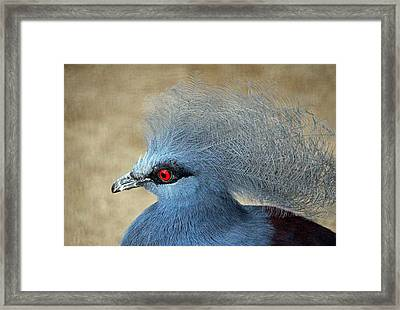 Common Crowned Pigeon Framed Print by Cynthia Guinn