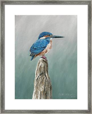 Common Kingfisher Framed Print by Rob Dreyer AFC